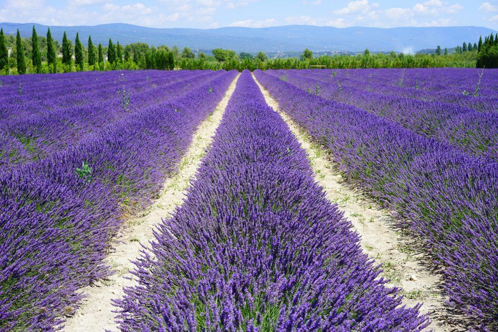 Landausflug durch die Provence